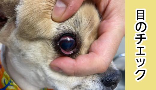 愛犬の目のチェック